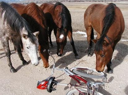 horses-and-bike.jpg
